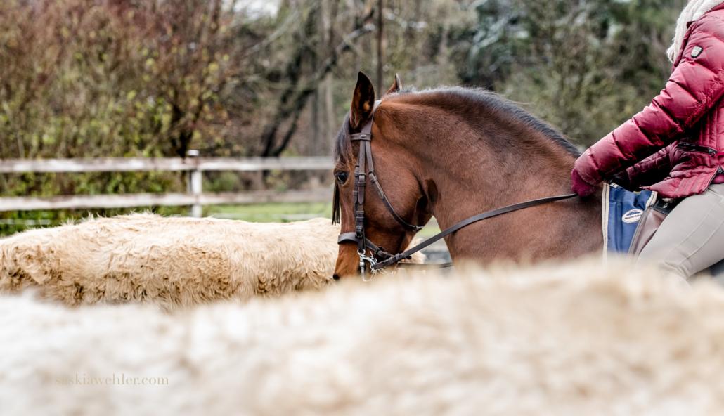 Rinderarbeit Working Equitation