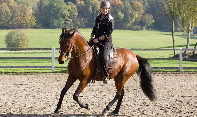 Foto von www.katjamayer-pferdefotografie.de