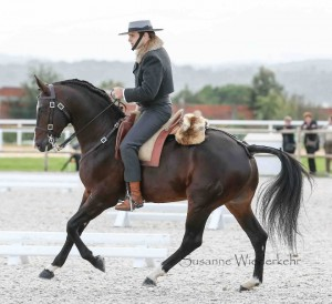 Dressur Working Equitation