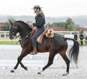 Dressur Working Equitation
