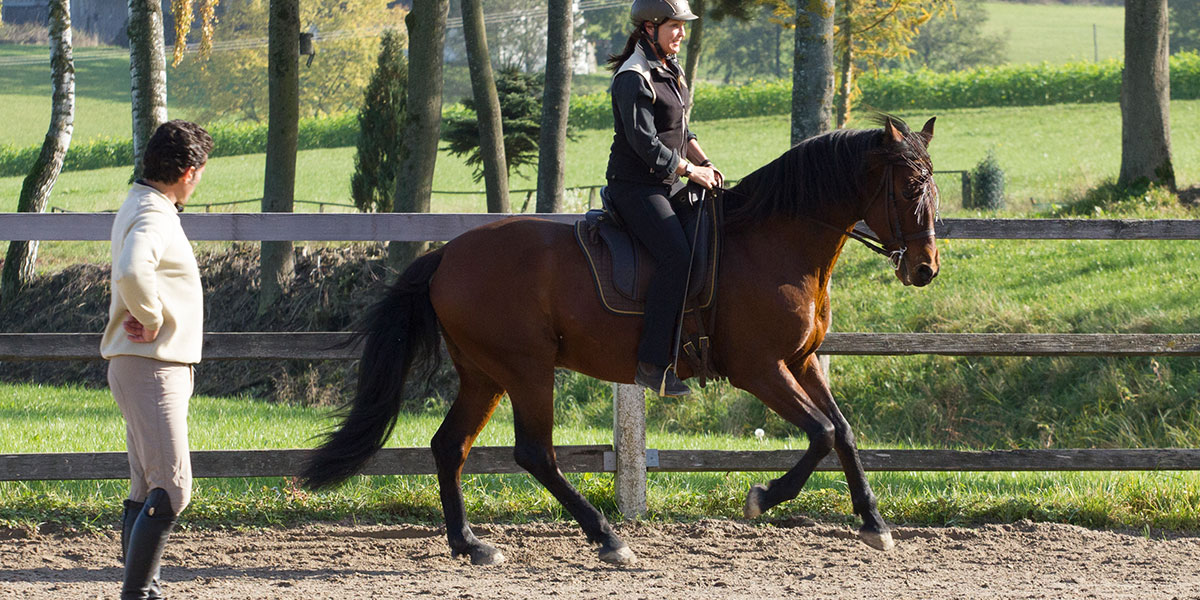 Working Equitation Trainer