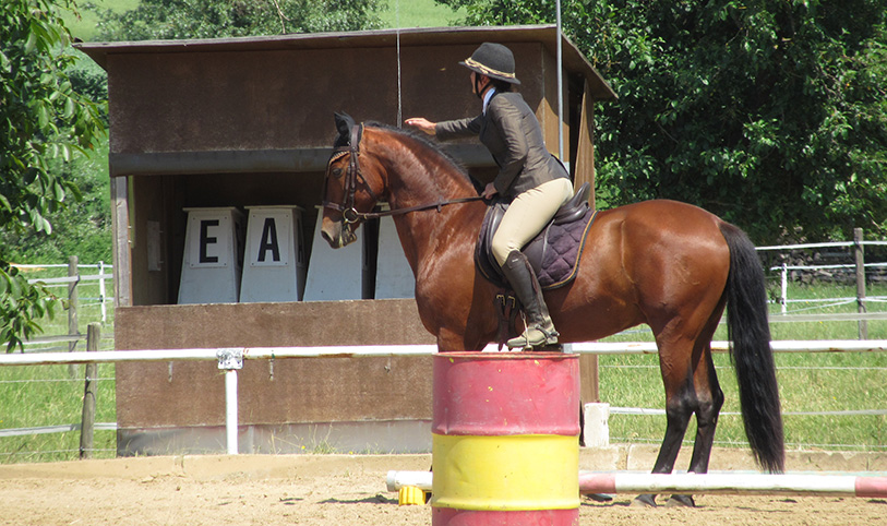 Working Equitation Turnier
