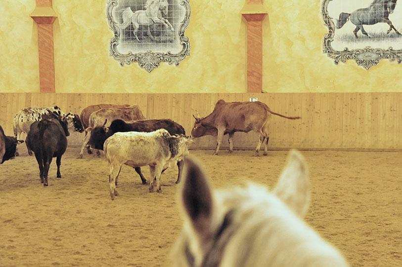 Rinderarbeit-ist-Kopfarbeit
