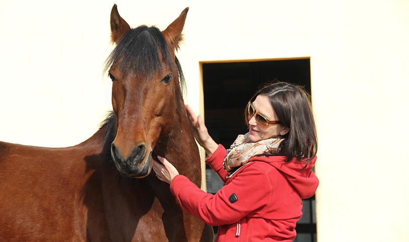 Wer ist mein Pferd?