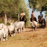 Butteri der Provinz Grosseto